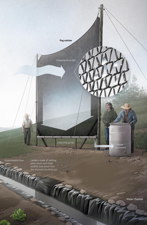 Illustration of fog catcher