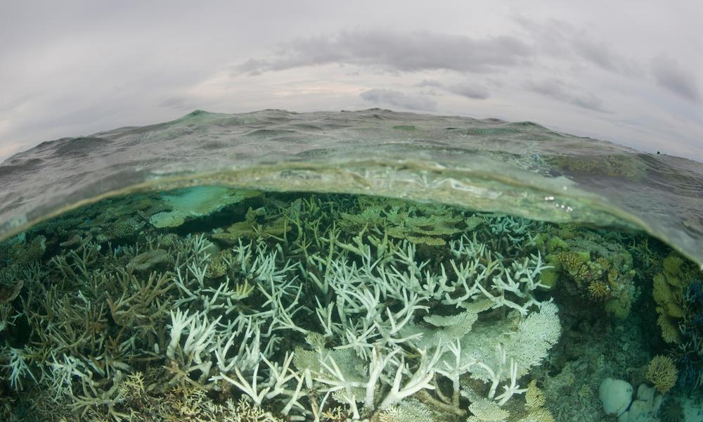 Tubbataha Reefs Natural Park Jürgen Freund WW183585