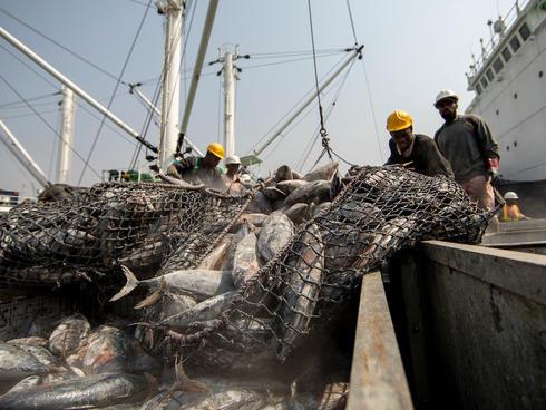 Ghana Tuna Fisheries
