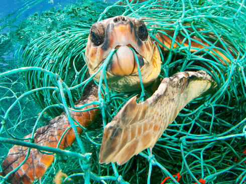 sea turtle and net WW24369 Jordi Chias