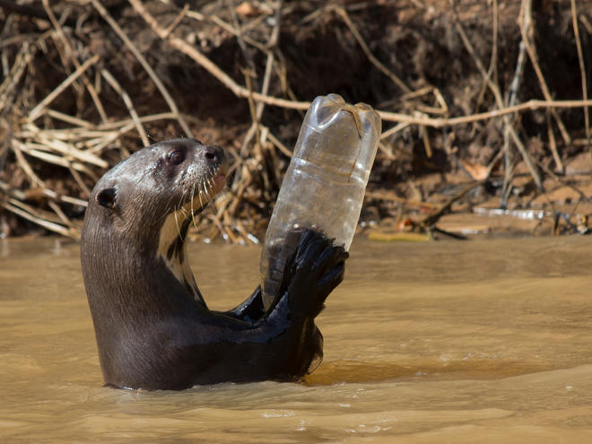 giant otter and water bottle WW287919 Paul Williams