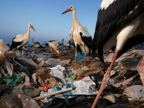 storks and plastic Jasper Doest