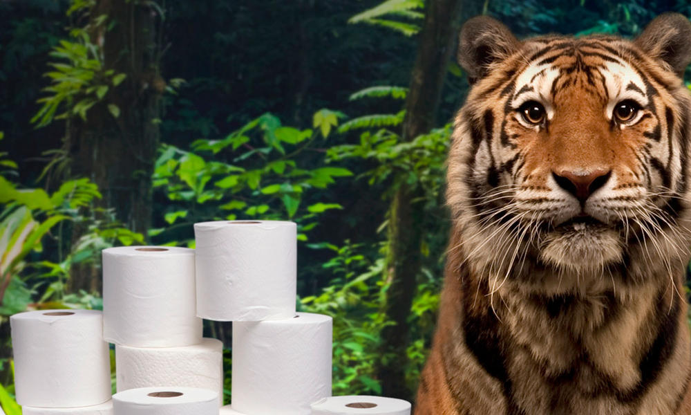Tiger in forest surrounded by toilet paper