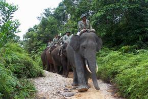 Asian Elephant | Species | WWF
