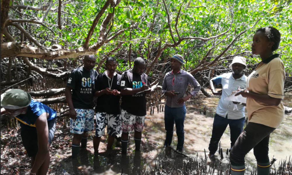 A group assesses mangroves in Kenya