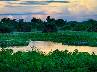 WWF Jaguars and Wildlife of Brazils Pantanal Expedition - River Landscape