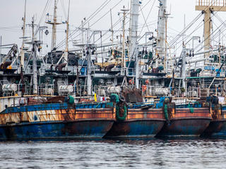 fish with trawl fishing net