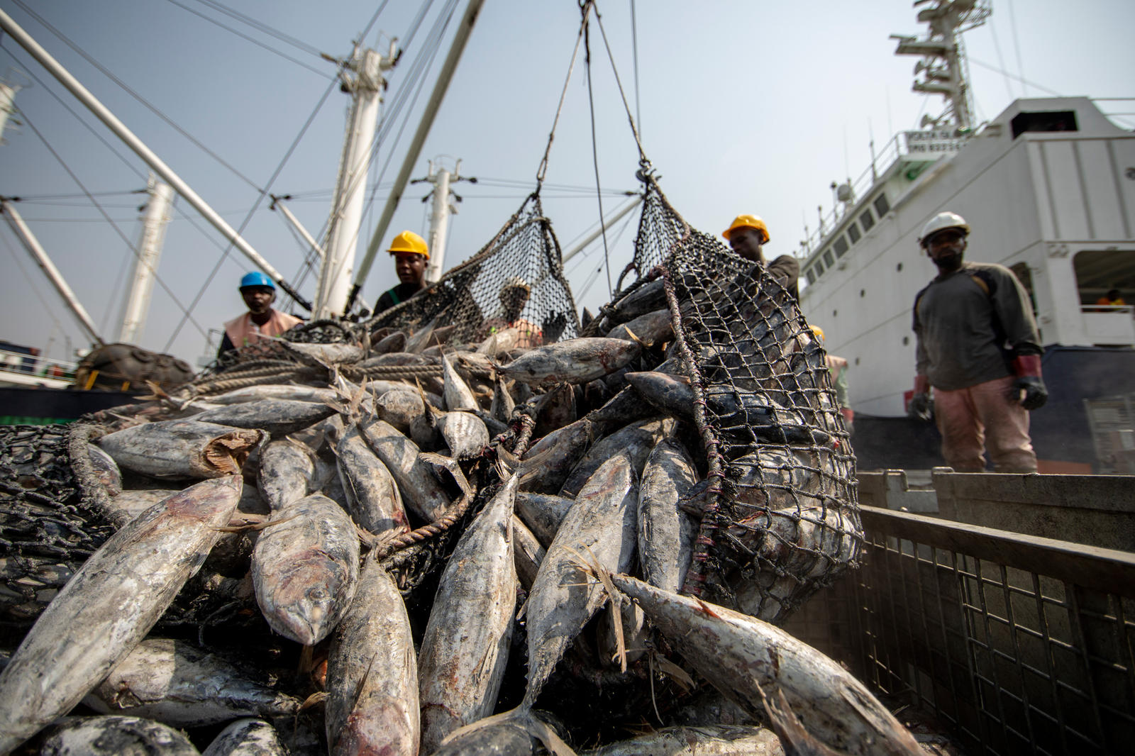Workers sorting tuna