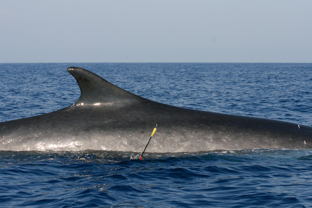 Whale with arrow