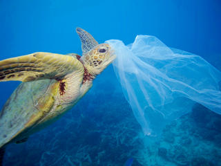 Loggerhead Turtle | Sea Turtles | Species | WWF