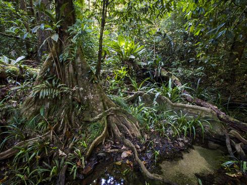 forest WW2120967 Emmanuel Rondeau