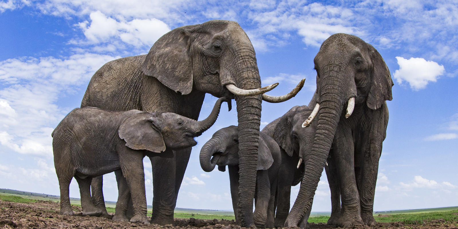 What S The Difference Between Asian And African Elephants And 8