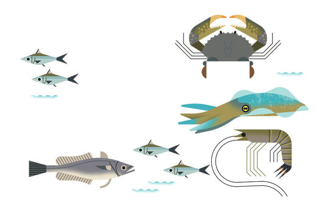 Vector illustration of various fish, crab, cuttlefish and shrimp