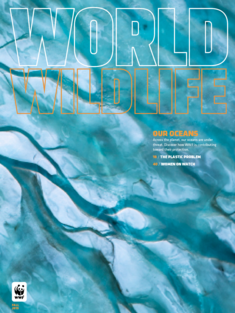 WWF Fall 2019 Magazine Cover