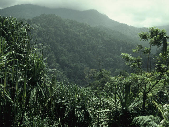 Kerinci Seblat National Park Overview of forest Sumatra, Indonesia