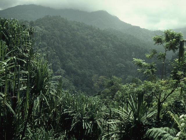 Kerinci Seblat National Park Overview of forest Sumatra, Indonesia