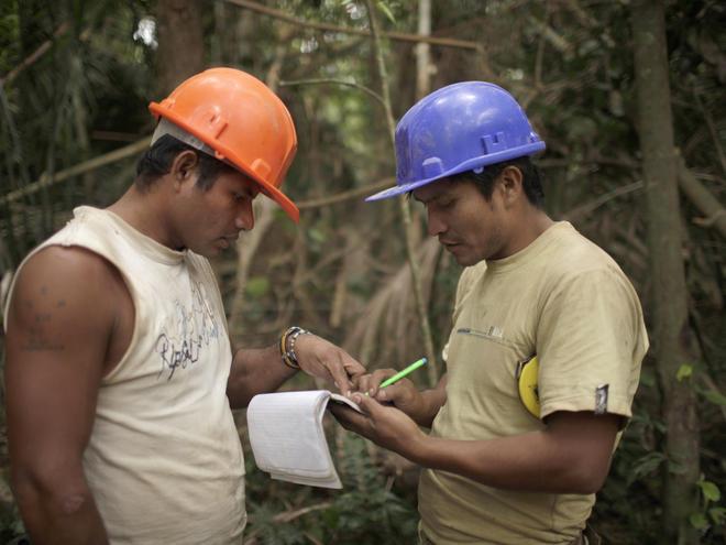 Writing down data of a Shihuahuaco tree
