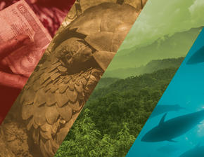 Image representing TNRC's four focus areas: wildlife, fisheries, forests, and finance