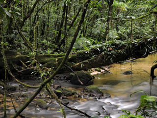 Stream of water inside the Atlantic forest at Figueira trail, Carlos Botelho State Park, São Paulo, Brazil.