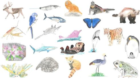 Bridget Berg Student Artwork - Various Animals