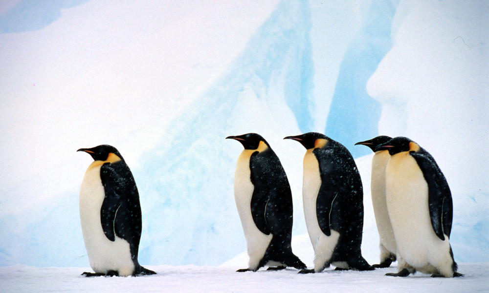 Penguins and Blue Ice