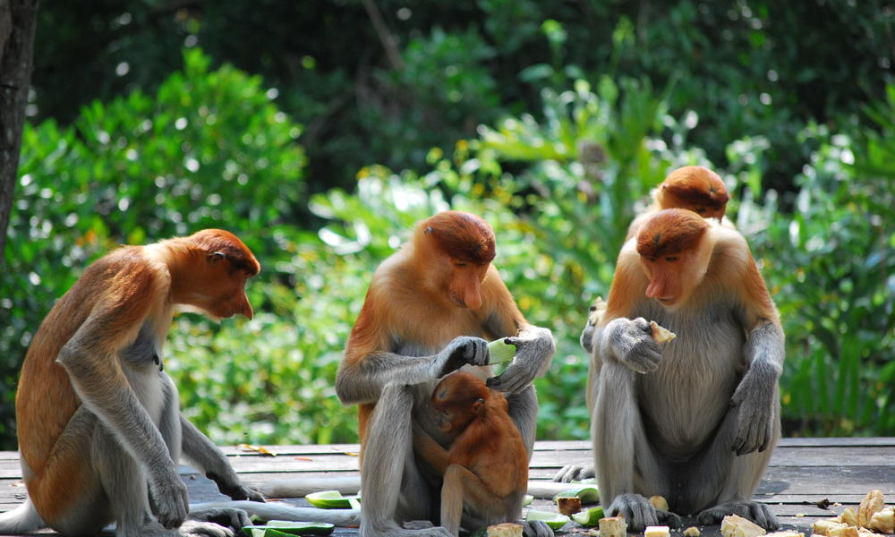 Image from the island of Borneo