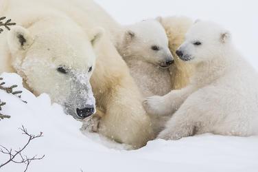 Funny Polar Bear Names