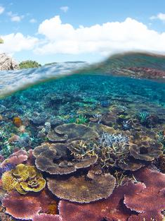 Underwater scenery of coral reefs within the Tun Mustapha Park