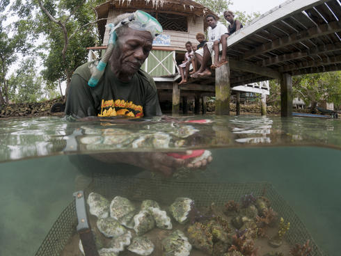 Erik Koti cleans his farmed giant clams