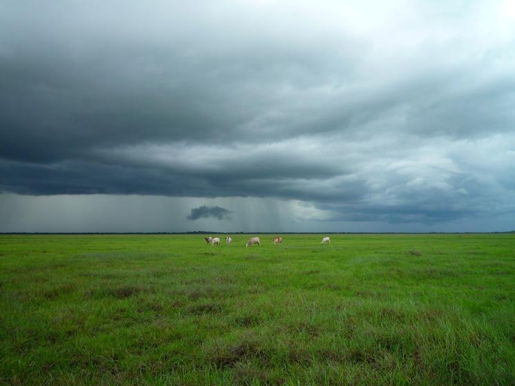 Animals on green field under stormy sky