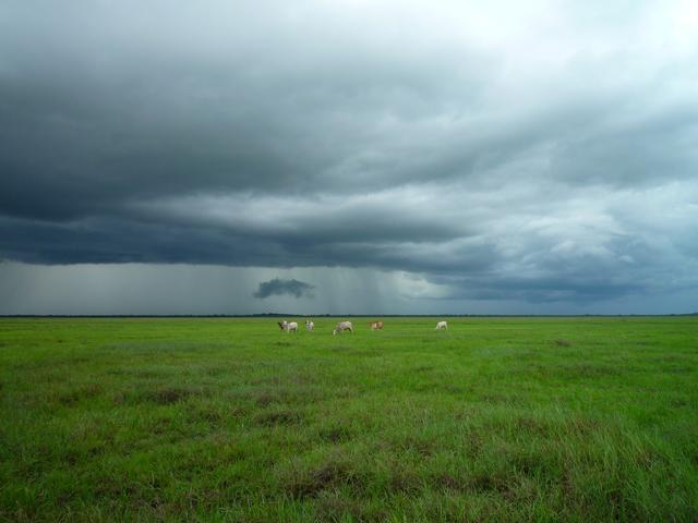 Animals on green field under stormy sky