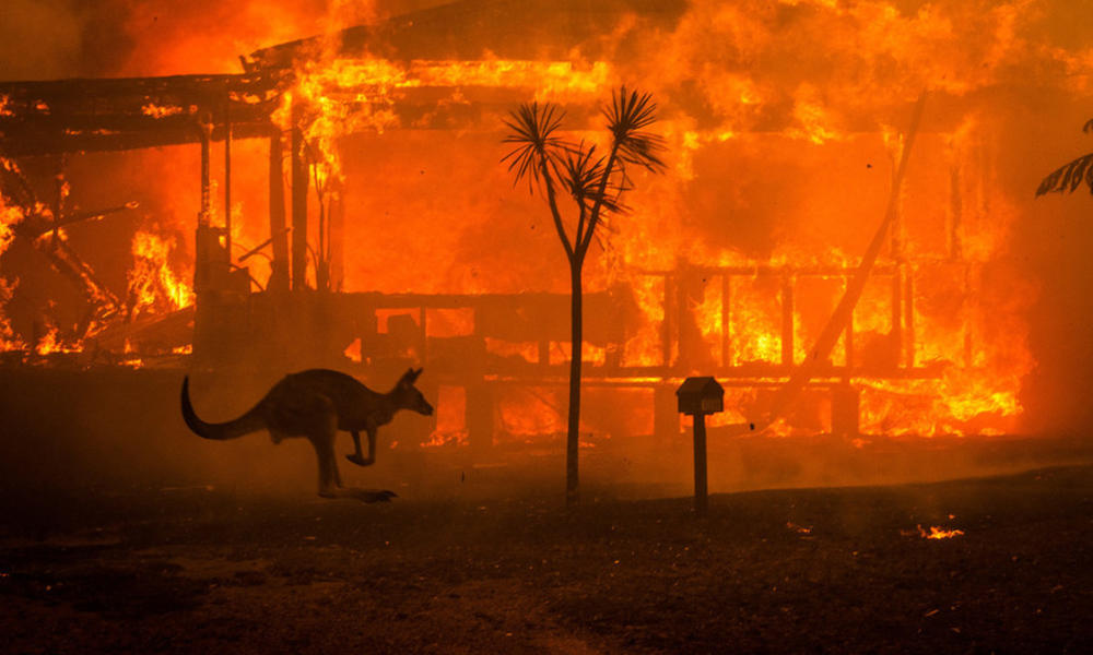 kangaroo moves through bushfire in Australia