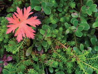 Plants in Port Heiden