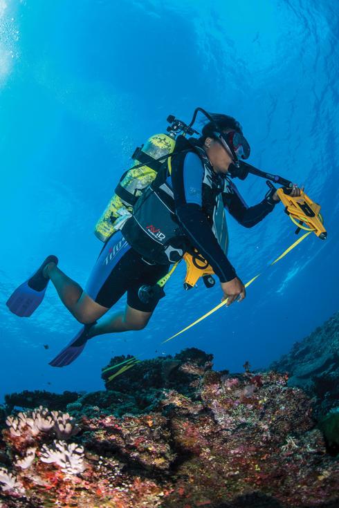 Scuba diver survey