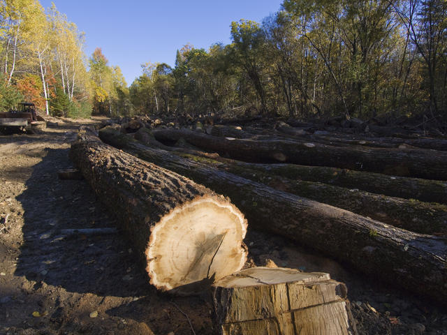 Illegal logging operation, Russian Far East