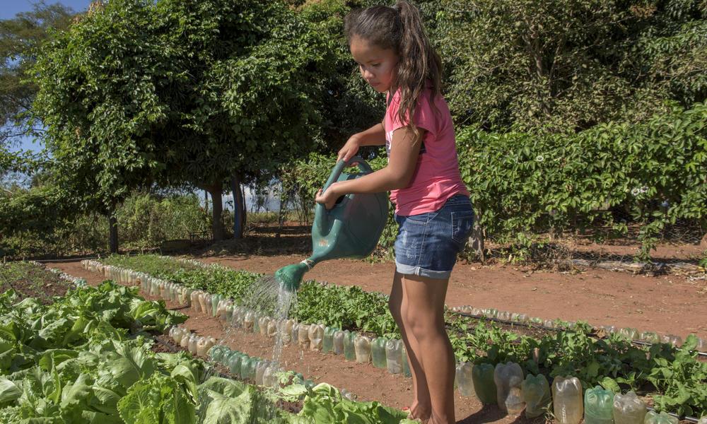 Student waters plant in school garden