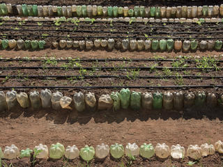 Rows of crops planted by students in Pantanal
