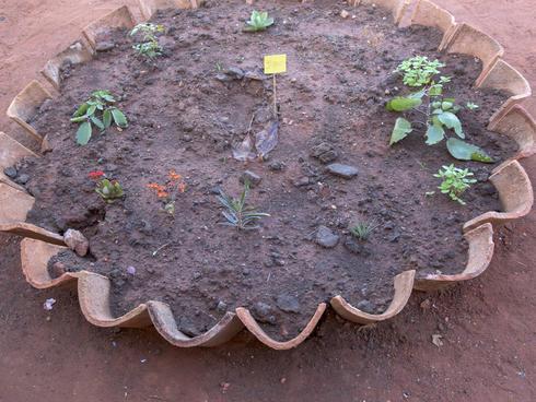 School garden planted by kindergarten class in Pantanal