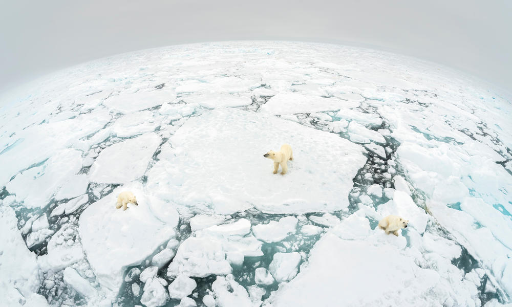 Polar bear (Ursus maritimus) mother and two cubs standing on fractured ice floe. Svalbard, Norway.
