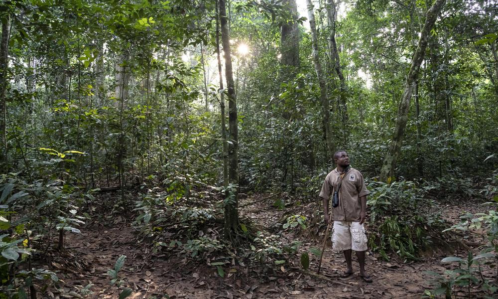 Ossolo Dacko, a BaAka tracker for the western lowland gorilla habituation program, Dzanga-Sangha Special Reserve, Central African Republic
