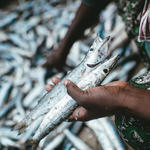 A woman sorts through fish for selling. Mafia Island, Tanzania.
