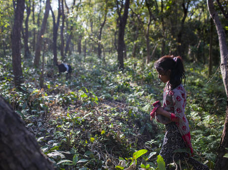 Children collecting grasses on the floor of the community forest in Nepal