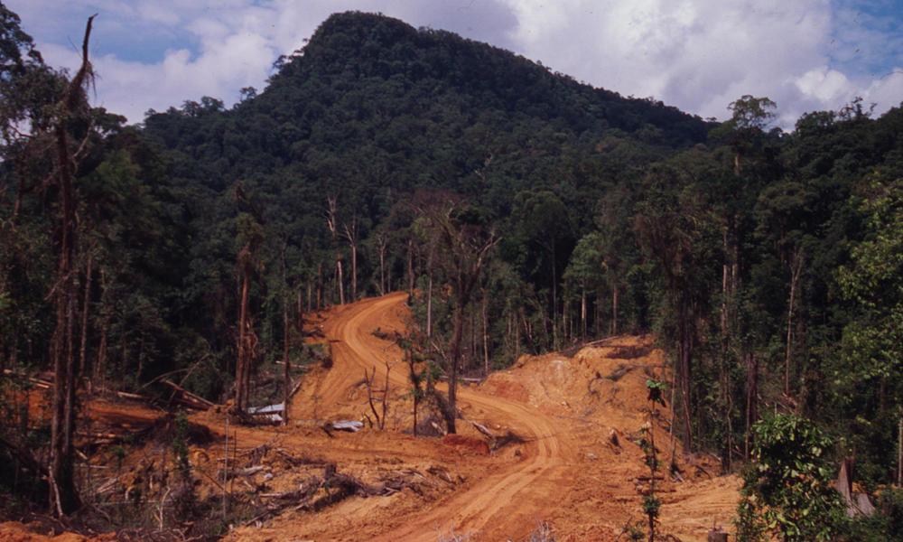 Orangutan habitat