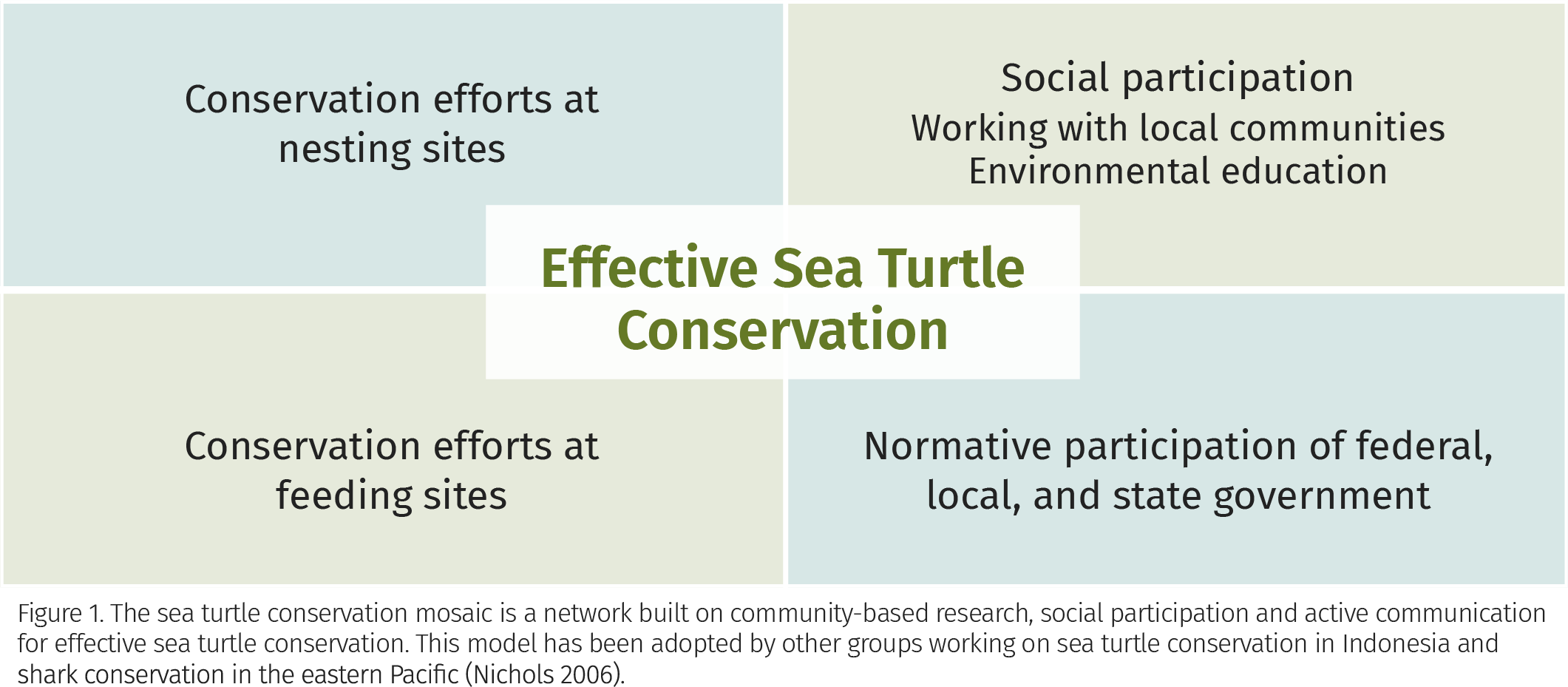 Figure 1. The sea turtle conservation mosaic is a network built on community-based research, social participation and active communication for effective sea turtle conservation. This model has been adopted by other groups working on sea turtle conservation in Indonesia and shark conservation in the eastern Pacific (Nichols 2006).