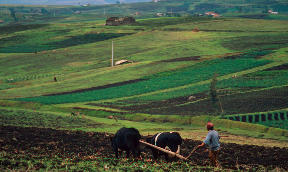 Farming in the rich volcanic soil in the Andes Mountains. Near Cayambe, Pichincha, Ecuador