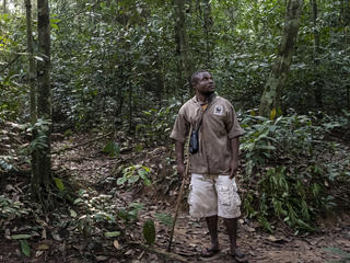 Ossolo Dacko, a BaAka tracker for the western lowland gorilla habituation program, Dzanga-Sangha Special Reserve, Central African Republic