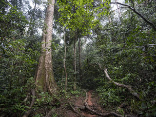 rain forest, Dzanga Sangha, Central African Republic