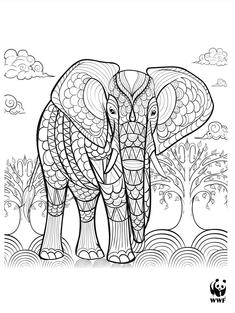 Wild Classroom African Elephant Coloring Page