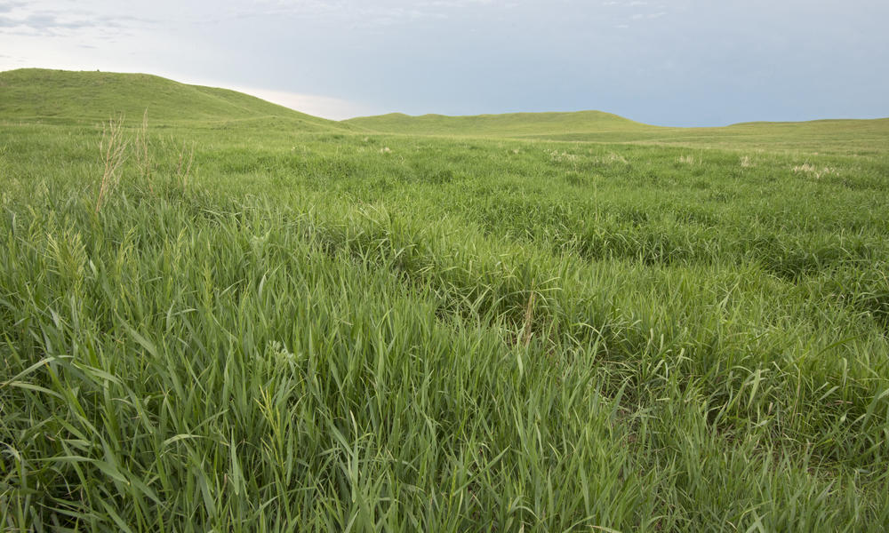 Healthy grasslands, Lowry, South Dakota