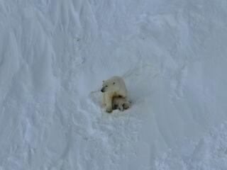 Mother polar bear with her cub in snow-covered landscape